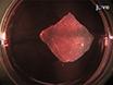 <em>Ex vivo</em> infektion af murint Epidermis med herpes simplex virus type 1 thumbnail