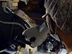 Musen Runda fönster metoden för ototoxisk Agent Leverans: En snabb och tillförlitlig teknik för att framkalla Cochlear celldegenerering thumbnail