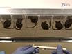 Evaluación de perigenital Sensibilidad y Prostática mástil activación celular en un modelo de ratón de la separación materna neonatal thumbnail