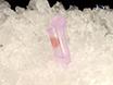 Passo-específico Seleção de mouse Espermátides por citometria de fluxo thumbnail