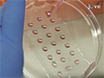 A Cancer Cell Spheroid Assay to Assess Invasion in a 3D Setting thumbnail