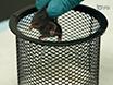 Een batterij van Motor Tests in een neonatale muis-model van Cerebral Palsy thumbnail