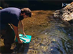 A Simple Approach to Manipulate Dissolved Oxygen for Animal Behavior Observations thumbnail
