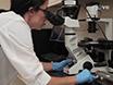 Microglia as a Surrogate Biosensor to Determine Nanoparticle Neurotoxicity thumbnail