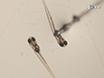 High-fat Feeding Paradigm for Larval Zebrafish: Feeding, Live Imaging, and Quantification of Food Intake thumbnail