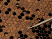 Evaluating the Effect of Environmental Chemicals on Honey Bee Development from the Individual to Colony Level thumbnail