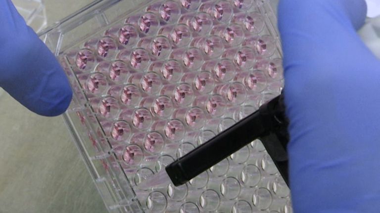 Études de Virus influenza de type A dans un modèle murin d'Infection thumbnail