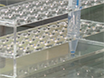 <em>In Vivo</em> Tracking of Human Adipose-derived Mesenchymal Stem Cells in a Rat Knee Osteoarthritis Model with Fluorescent Lipophilic Membrane Dye thumbnail