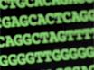 Pyrosequencing: een eenvoudige methode voor Nauwkeurige Genotyping thumbnail