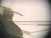 Test de la barrières physiologiques à la transmission virale chez les pucerons avec microinjection thumbnail