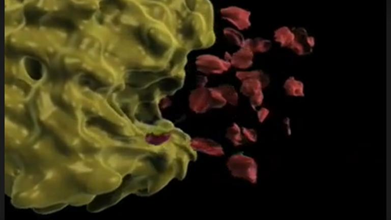 Sigma non spécifiques Assay activité de la protéase - caséine comme substrat thumbnail