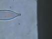 Pression de polissage Pipettes Amélioration patch-clamp thumbnail